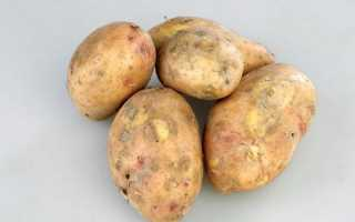 Картофель Славянка: описание и характеристика сорта, урожайность с фото