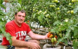 Помидоры в мешках: пошаговое выращивание в открытом грунте и теплице