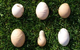 Почему куры несут яйца с тонкой скорлупой: что делать, чем подкормить, что дать для укрепления