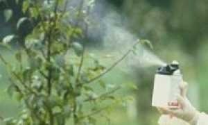 Вредители вишни и борьба с ними: чем обработать и опрыскать, лучшие средства