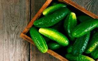 Огурец Борисыч: характеристика и описание сорта, урожайность с фото