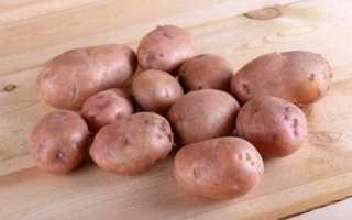 Картофель Синеглазка: описание и характеристика сорта, выращивание и урожайность с фото