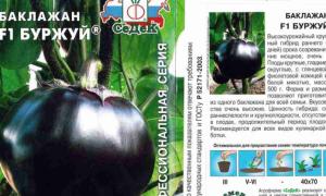 Баклажан Буржуй: описание и характеристики сорта, выращивание и уход с фото