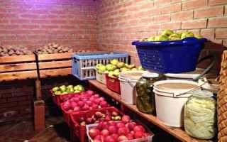 Как хранить репу на зиму в домашних условиях: в погребе, квартире и овощной яме