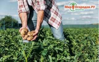 Почва для яблони: какую любит — кислую или щелочную, какой грунт нужен
