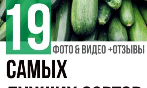 Кабачок цуккини: описание сортов, выращивание, посадка и уход с фото