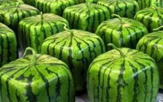 Арбуз квадратный: как выращивают своими руками в домашних условиях