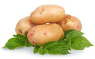 Картофель Аврора: описание и характеристика сорта, отзывы садоводов с фото