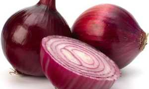 Фиолетовый и красный лук: когда убирать, как хранить, выращивание и уход с фото