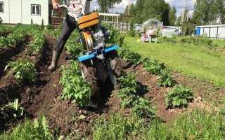 Как быстро прополоть картошку триммером, мотоблоком и другими приспособлениями?