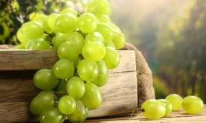 Вино из зеленого винограда: 4 простых рецептов приготовления в домашних условиях