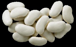 Белая фасоль: польза и вред для здоровья, описание сортов и выращивание с фото