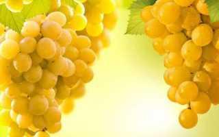 Ркацители: сорт винограда и его описание, характеристики и правила ухода