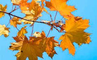 Лунный календарь озеленения на октябрь 2020 года