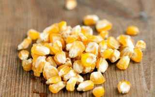 Как размножается кукуруза: выбор участка, выращивание и уход за рассадой