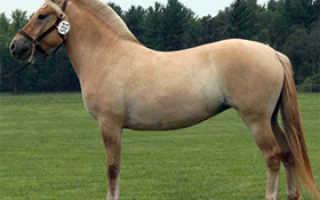Фотография костюма и костюма кобылы   Мои лошади