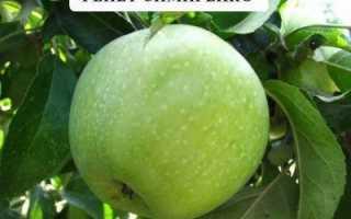 Яблоки Семеренко: описание и характеристики сорта, польза и вред, выращивание