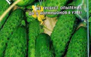 Огурец Брейк: характеристика и описание сорта, выращивание и урожайность с фото