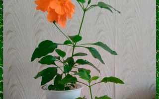 Перекрестное размножение семенами или черенками, правила ухода