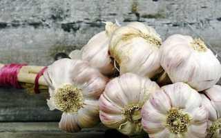 Чеснок Любаша: описание и рекомендации по выращиванию сорта, отзывы дачников с фото