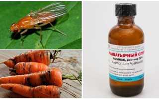 Морковная муха: как с ней бороться нашатырным спиртом