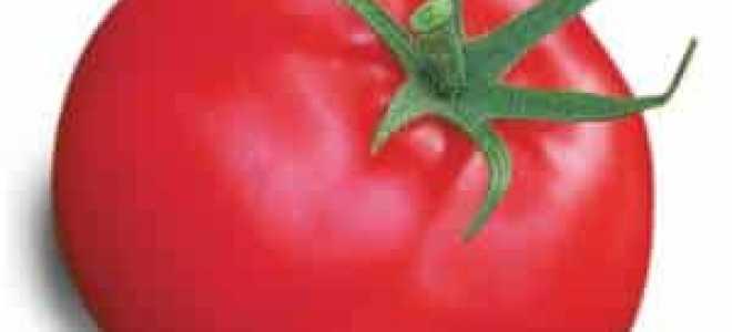 Томат Афродита: характеристика и описание сорта, выращивание с фото