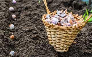 Что сажать после огурцов на следующий год: можно ли лук, картофель, чеснок