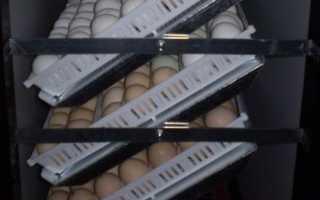 Самодельный инкубатор с автоматическим переворотом яиц: устройство и механизм своими руками
