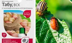 Табу от колорадского жука: инструкция по применению для обработки