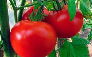 Лучшие сорта томатов для Саратовской области с фото
