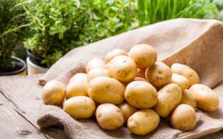 Урожайность картофеля с 1 га: как увеличить на домашнем огороде