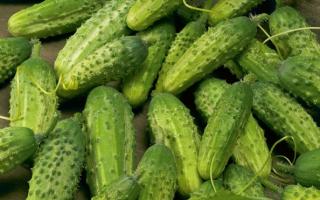 Огурец Сестрица Аленушка: характеристика и описание сорта, урожайность с фото