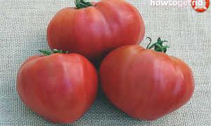 Томат Косово: описание сорта и урожайность с фото