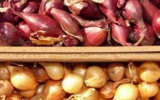 11 лучших сортов голландского лука и их описание с фото