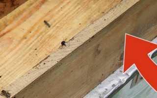 Кормушки для пчел: как сделать кормушку для пчел своими руками, способы сборки, фото, видео