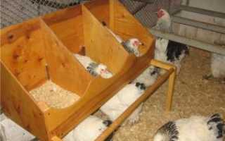 Как вырастить цыпленка из яйца: когда лучше выводить, уход в домашних условиях