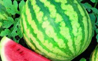 Арбуз «Фотон»: описание сорта, урожайность и особенности выращивания с фото