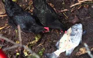 Рыбная мука для кур несушек: сколько давать и можно ли, польза, правила использования