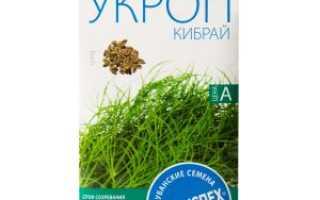 Укроп Кибрай: описание сорта, выращивание, уход и урожайность с фото