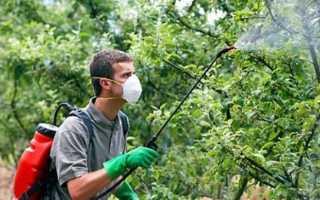 Летние обработки на сливе от болезней и вредителей