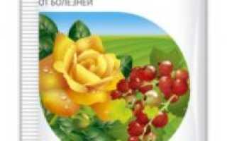 Фунгицид «Топаз» для винограда: инструкция по применению, обработка и сроки ожидания