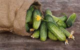 Выращивание огурцов в открытом грунте в Ленинградской области: лучшие сорта с фото