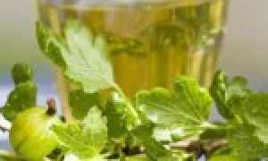 Вино из крыжовника в домашних условиях: 15 простых пошаговых рецептов