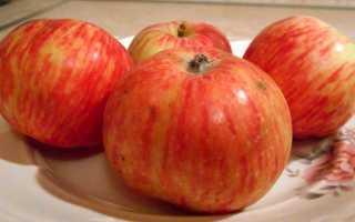 Яблоня Конфетное: описание и характеристики сорта, выращивание и уход с фото