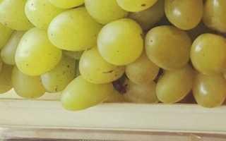 Виноград Галахад: описание сорта и история селекции, характеристики с фото