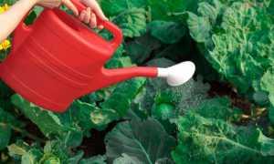 Борная кислота для капусты: опрыскивание, как обработать для завязи
