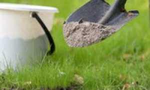 Подкормка сливы летом: правила и сроки внесения, как и чем удобрять