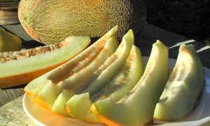 Дыня Торпеда: описание сорта, польза и вред для человека, как выбрать спелую с фото
