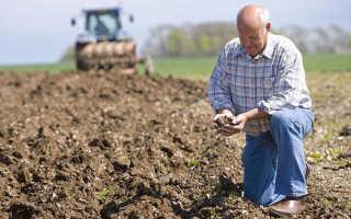 Обработка почвы от болезней и вредителей: ясень, Актара, Алирин Б и обливание кипятком