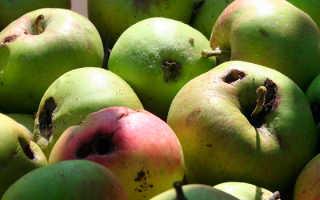 Плодожорка на яблоне: методы борьбы, чем обработать, чтобы избавиться